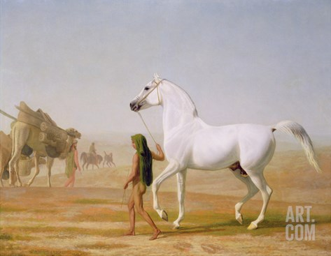 The Wellesley Grey Arabian Led Through the Desert, c.1810 Stretched Canvas Print