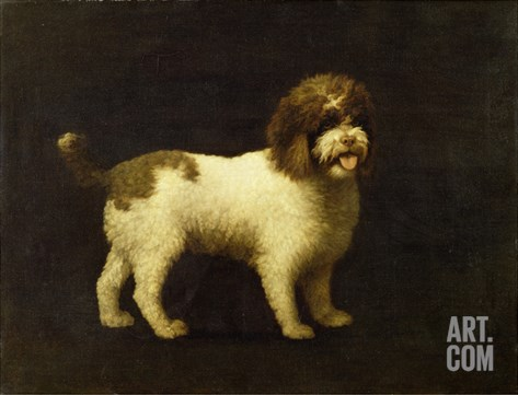 A Water Spaniel, 1769 Stretched Canvas Print