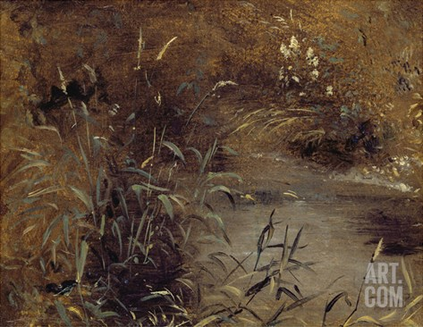 Rushes by a Pool, C.1821 (Oil on Paper on Board) Stretched Canvas Print