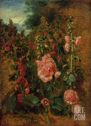 Study of Hollyhocks, C.1826 (Oil on Board) Stretched Canvas Print