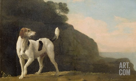 A Foxhound, C.1760 (Oil on Paper Laid on Board) Stretched Canvas Print