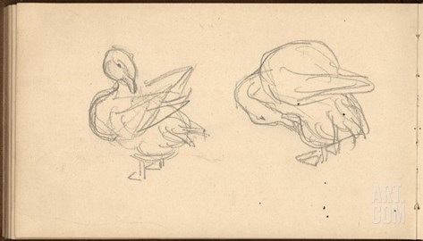 Two Ducks Preening their Feathers (Pencil on Paper) Stretched Canvas Print
