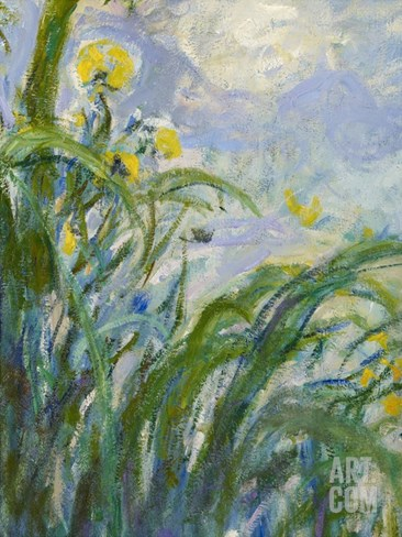 The Yellow Iris (Detail) Stretched Canvas Print