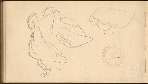 Study of Ducks (Pencil on Paper) Stretched Canvas Print