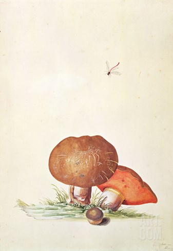 Cep Mushroom with Damsel Dragonfly Stretched Canvas Print