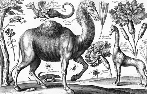 Animalium, Ferarum Et Bestiarum, Engraved by David Loggan, 1663 (Engraving) Stretched Canvas Print