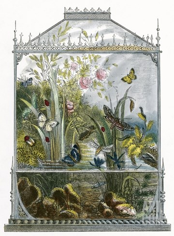 The Butterfly Vivarium Stretched Canvas Print