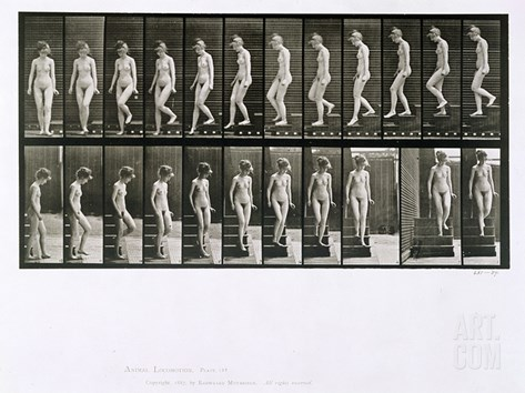 Woman Descending Steps, Plate 137 from 'Animal Locomotion', 1887 (B/W Photo) Stretched Canvas Print
