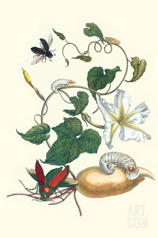 Moonflower with Giant Metallic Ceiba Borer and a Horned Passalus Beetle Stretched Canvas Print