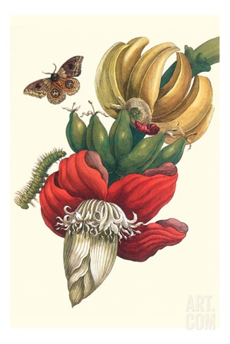 Banana Tree and Moths Stretched Canvas Print