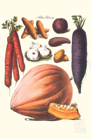 Vegetables; Carrot, Potato, Onion, and Pumpkin Stretched Canvas Print