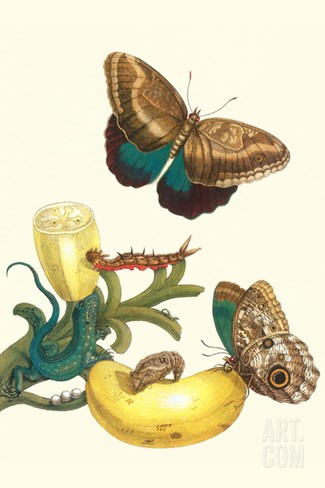 Banana Plant with Teucer Giant Owl Butterfly and a Rainbow Whiptail Lizard Stretched Canvas Print