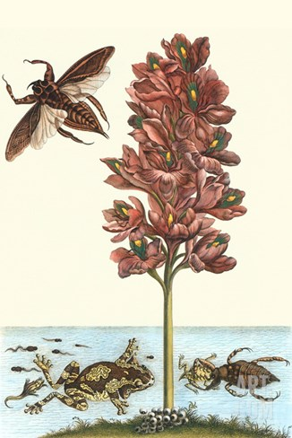 Common Water Hyacinth with a Veined Tree Frog and a Giant Water Bug Stretched Canvas Print
