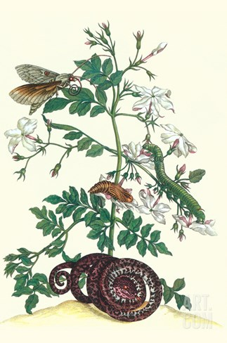 Royal Jasmine with an Amazon Tree Boa and an Ello Sphinx Moth Stretched Canvas Print