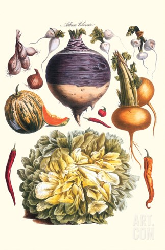 Vegetables; Peppers, Onion, Raddish, Tubers, Pumpkin, and Lettuce Stretched Canvas Print