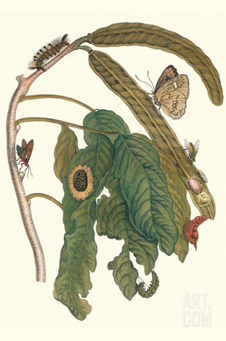 Ice Cream Bean Plant, Cloudless Sulphur Butterfly and Caterpillar with Moth on the Stalk Stretched Canvas Print
