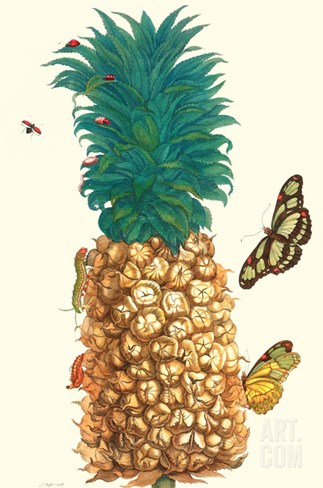 Butterfly and Beetle on a Pineapple Stretched Canvas Print
