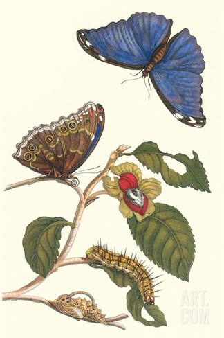 Epiphytic Climbing Plant with a Peleides Blue Morpho Butterfly and a Gulf Fritillary Stretched Canvas Print