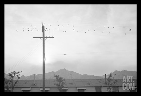 Birds on Wire Stretched Canvas Print
