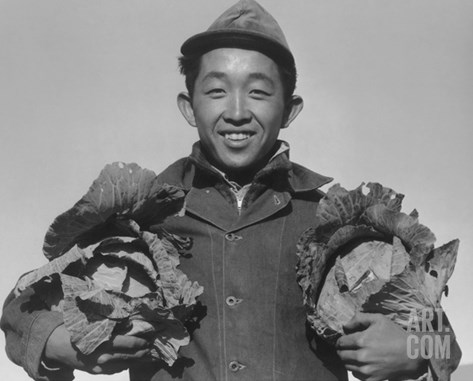Richard Kobayashi, Farmer with Cabbages Stretched Canvas Print