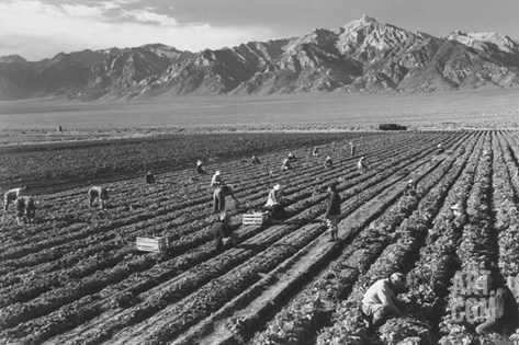 Farm, Farm Workers, Mt. Williamson in Background Stretched Canvas Print
