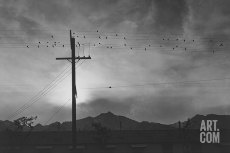Birds on Wire, Evening Stretched Canvas Print