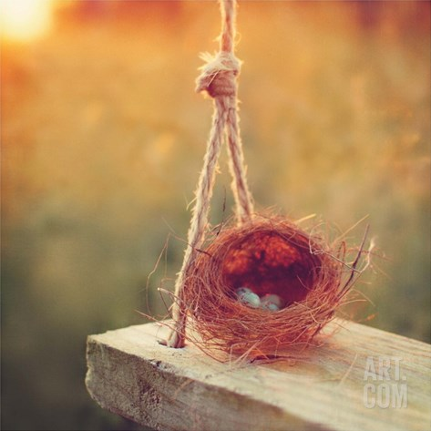 Swing and Nest Stretched Canvas Print