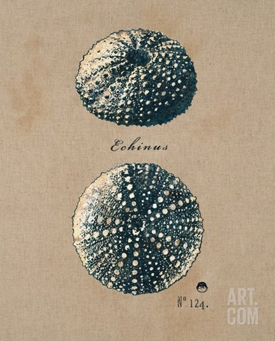 Vintage Linen Sea Urchin Stretched Canvas Print