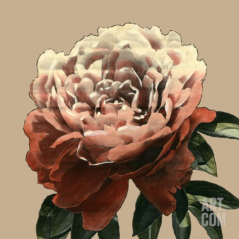 Heirloom Rose II Stretched Canvas Print