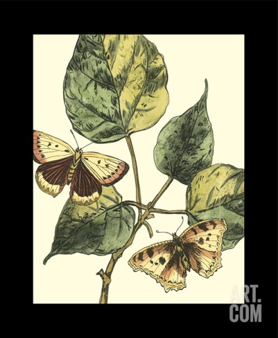 Butterflies and Leaves II Stretched Canvas Print