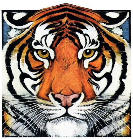 """Tiger Head,""September 18, 1926 Stretched Canvas Print"