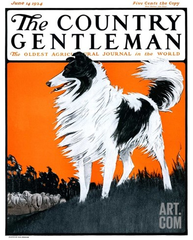"""""""Sheepdog Oversees Flock,"""" Country Gentleman Cover, June 14, 1924 Stretched Canvas Print"""