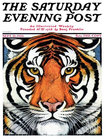 """Tiger Head,"" Saturday Evening Post Cover, September 18, 1926 Stretched Canvas Print"