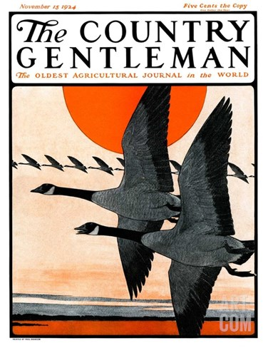"""""""Flock of Geese in Formation,"""" Country Gentleman Cover, November 15, 1924 Stretched Canvas Print"""