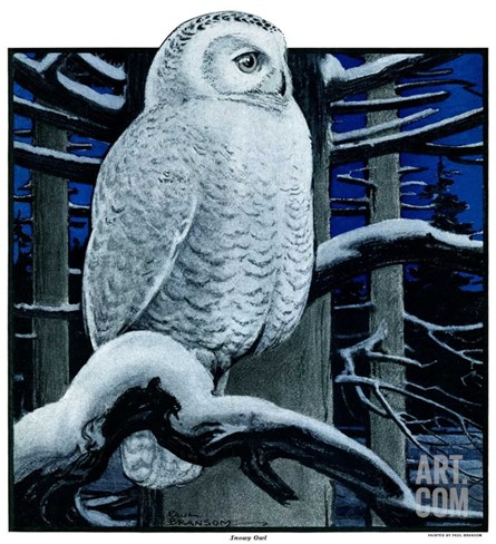 """Snowy Owl in Forest at Night,""January 12, 1924 Stretched Canvas Print"