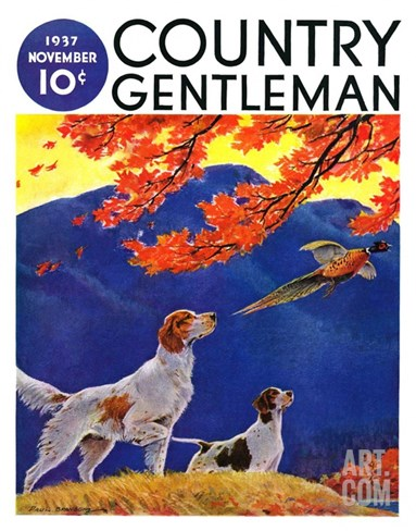 """Pointing to the Pheasant,"" Country Gentleman Cover, November 1, 1937 Stretched Canvas Print"