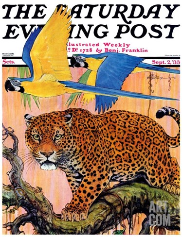 """Leopard and Parrots in Jungle,"" Saturday Evening Post Cover, September 2, 1933 Stretched Canvas Print"