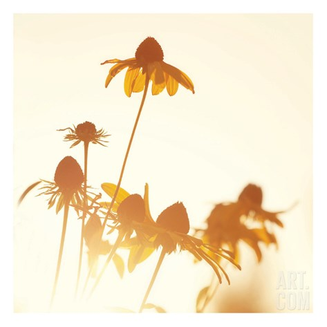 Sundown Flowers Stretched Canvas Print