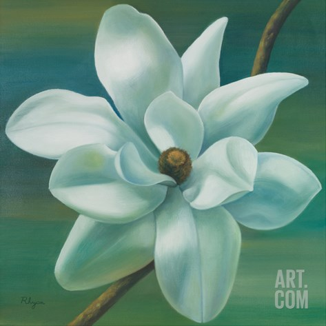 Star Magnolia Stretched Canvas Print