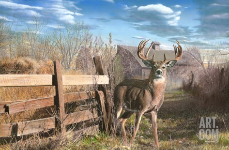 Back Forty Buck Stretched Canvas Print