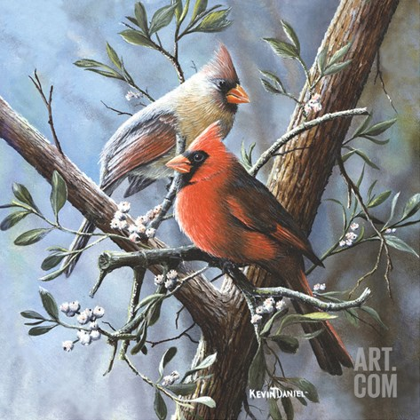 Cardinal Stretched Canvas Print